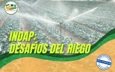 INDAP ABORDA DESAFÍOS 2021 EN RIEGO PARA LA PEQUEÑA AGRICULTURA